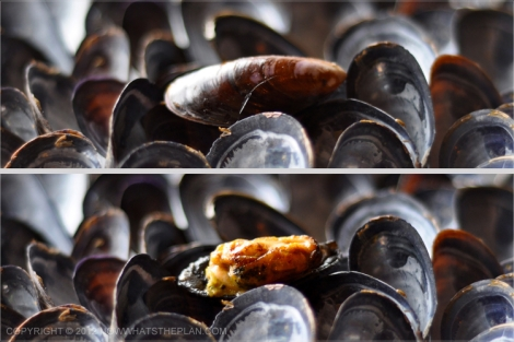 A tray of empty mussel shells with one whole mussel sitting on top