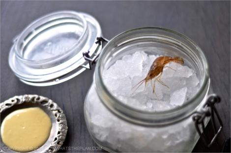 A single shrimp setting on a jar full of ice