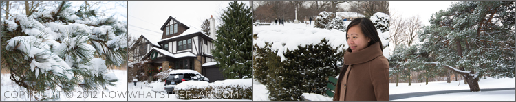 Snow-covered pine branches, houses and trees in and around High Park Toronto