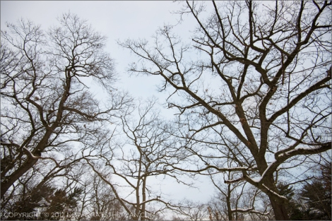 Canopy of crooked lines in High Park Toronto