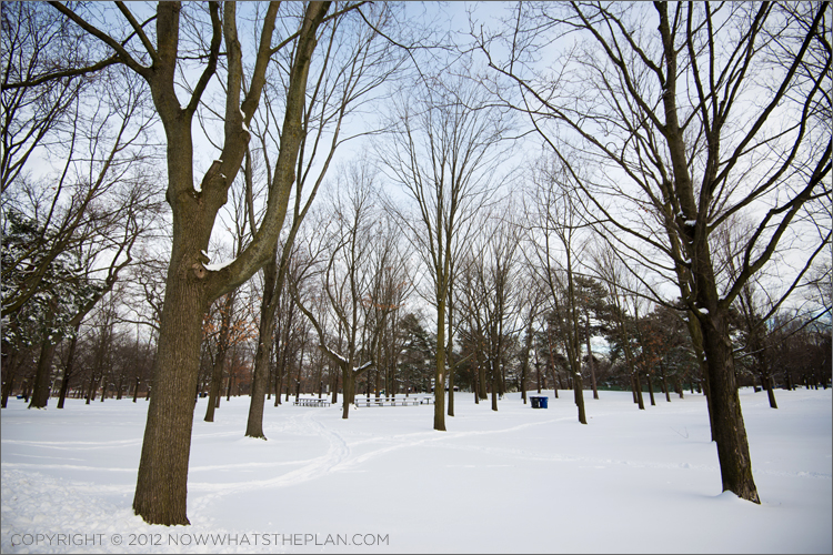 Tall trees with bare branches reaching out to the sky in Toronto's High Park
