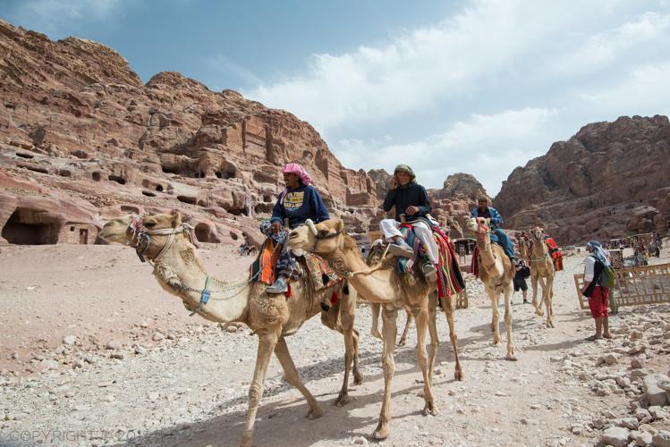 A modern day Bedouin camel caravan
