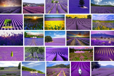 Google image search results for 'lavender fields.'  I'm inlove.